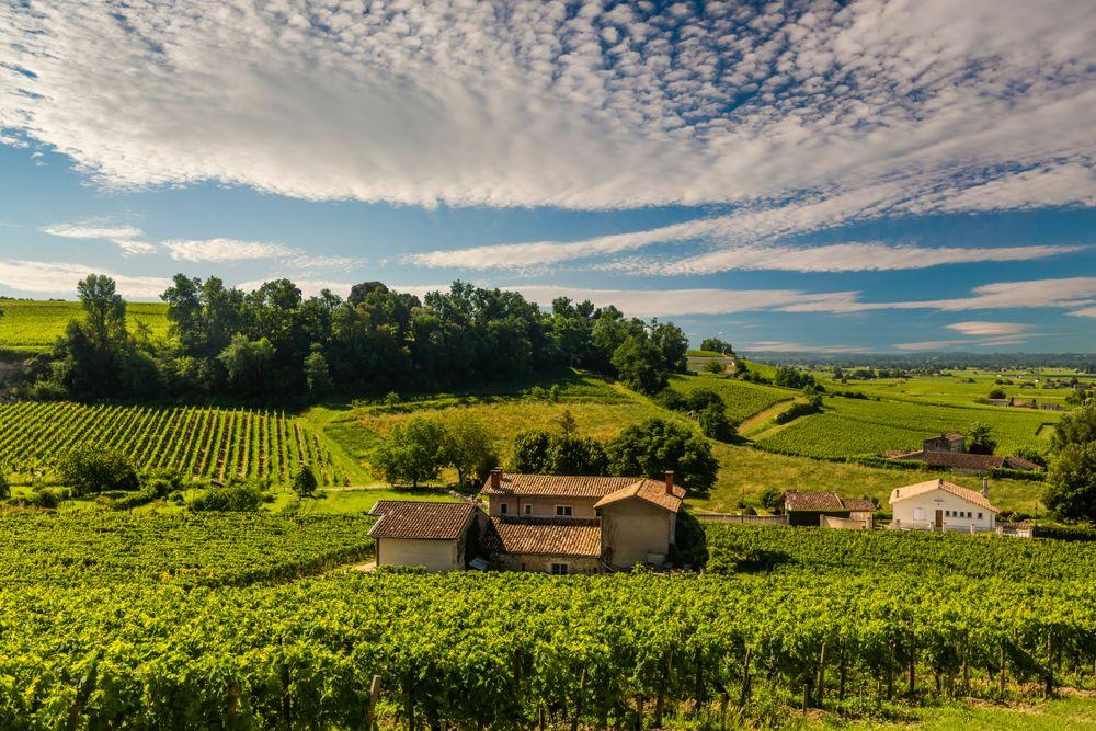vue d'un vignoble proche de Bordeaux