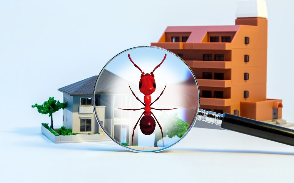 FICHE PRATIQUE - Le diagnostic termites